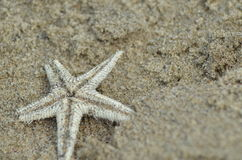Life out of Ocean. A Star Fish out from its home Stock Images