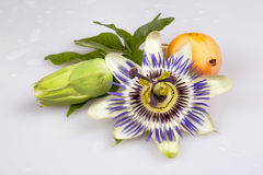 Life of a Passion Fruit royalty free stock photos