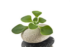 Life on the pebble - stone tower with green plan Royalty Free Stock Photography
