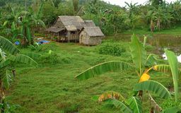 Life in the Philippine countryside Stock Photos