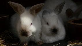 Life rabbits on that side of the locked cells stock video footage