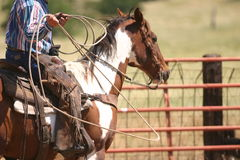 Life on the ranch. Paint horse and cowboy rider with a rope Stock Image