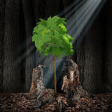 Life Renewal. And recovery concept as a green leaf tree shaped as a human head growing out of an old dead stump as survival symbol for rebirth and creating a Royalty Free Stock Photos