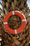 Life Ring Buoy Hanging on A Palm Tree.  Stock Photography
