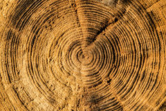 Life Rings of old log Royalty Free Stock Image