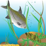 Life of river fishes Stock Photos