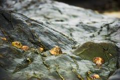 Life on the rocks. Aquatic Life on the rocks on the beaches of Galicia , Atlantic Ocean, Spain Royalty Free Stock Photos