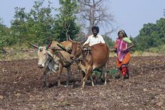 Life in Rural India Royalty Free Stock Image