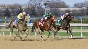 Life`s a Parlay Wins the Excelsior Stakes stock image
