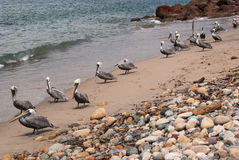 Life& x27; s una playa Fotos de archivo libres de regalías