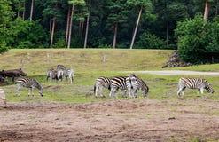 Life in the Safari Park Stock Photography