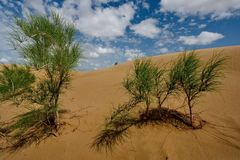 Life in sand dunes Senek. stock photo