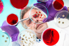 Life science research. Stock Photography