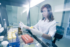 Life scientist researching in the laboratory. Female life scientist researching in laboratory, pipetting cell culture medium samples in laminar flow. Photo stock images