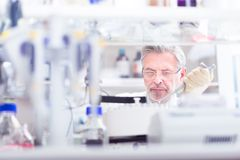 Life scientist researching in the laboratory. Royalty Free Stock Images