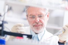 Life scientist researching in the laboratory. Royalty Free Stock Image