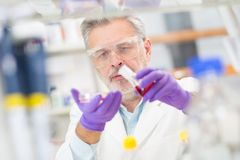 Life scientist researching in the laboratory. Stock Image