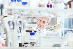 Life scientist researching in the laboratory. Life scientist researching in laboratory. Life sciences study living organisms on the level of microorganisms stock photo