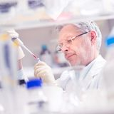 Life scientist researching in the laboratory. Senior life scientist researching in laboratory. Life sciences comprise fields of science that involve the royalty free stock image