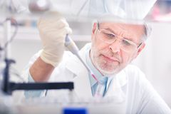 Life scientist researching in the laboratory. Senior life scientist researching in laboratory. Life sciences comprise fields of science that involve the stock photography