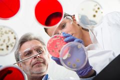 Life scientists researching in the health care laboratory. Stock Image