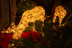 Life-size Reindeer decoration with bright Christmas lights. In the garden Stock Photography