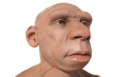 Life-sized Neanderthal bust. Montilla, Spain - March 2nd, 2019: Life-sized Neanderthal bust at Montilla Local History Museum, Cordoba, Spain. Sculpted by JM stock images