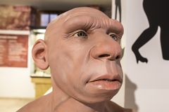 Life-sized Neanderthal bust. Montilla, Spain - March 2nd, 2019: Life-sized Neanderthal bust at Montilla Local History Museum, Cordoba, Spain. Sculpted by JM stock photos