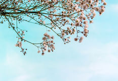 Life sky small flowers blue background. Small Flower Concept and Decoration Royalty Free Stock Photos