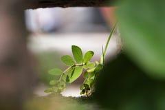 Life. Small plant at kitchakut mountain, Nalanda, India stock images