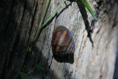 The life of a snail Stock Image