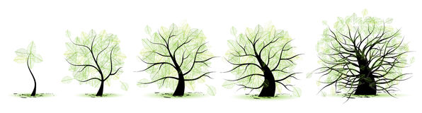 Life stages of tree. Childhood, adolescence, youth, adulthood, old age Stock Photo