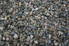 Life between stones. Green tiny life between stones Royalty Free Stock Photos