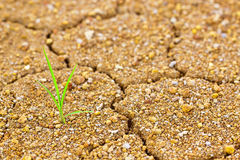 Life and struggle on dried land Stock Images
