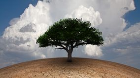 Life. Surrealism. Green tree in arid land. This image created in entirety by me and is entirely owned by me and is entirely legal for me to sell and distribute Royalty Free Stock Photos