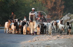 Life in Swat Valley, Pakistan. Shepherd leads his goats along the road during sunset in Mingora, the main town of Swat Valley, Northern Pakistan Stock Photos