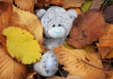 Life of the teddi-bear. He likes to lay under autumn leaves and to dream of spring Stock Images