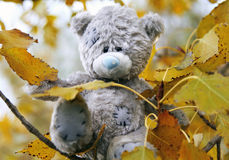 Life of the teddy-bear. The teddy-bear often walked on autumn park and sat down on a favourite tree to observe of passers-by Royalty Free Stock Images