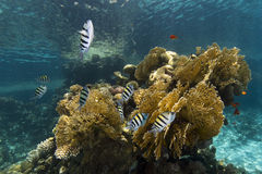 Corals and fish Stock Photo