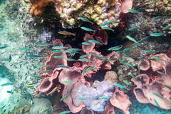 Life Underwater colorful coral reef fish crowd Stock Photos