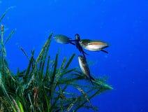 Life underwater Royalty Free Stock Photos