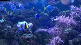 Life in the underwater world. Nemo fish. Sharks. Everything you can see under water. Life in the ocean and sea stock video footage