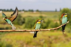 Life of wild colorful birds in summer. Wild nature stock photos