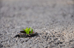 Life wins. A small plant rises out of a iron bar on a concrete sidewalk. Life wins stock photo