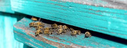 Life of Worker Bees. The Bees Bring Honey. Life of Worker Bees. The Bees Bring Honey stock photo