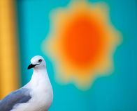 Life is worth living. A seagull and the sun Stock Photography