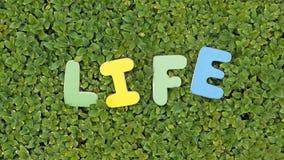 Life written Stock Image