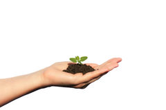 Life in Your Hands. Woman arm holding a small green plant. life Royalty Free Stock Photo