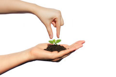 Life in Your Hands. Woman arm holding a small green plant. life Stock Photo