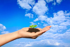 Life in your hands. Hand pointing to the sky holding a fragile plant Royalty Free Stock Images